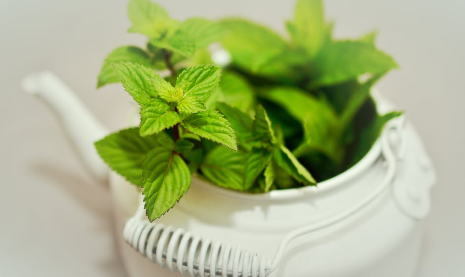 Peppermint for sleep apnea