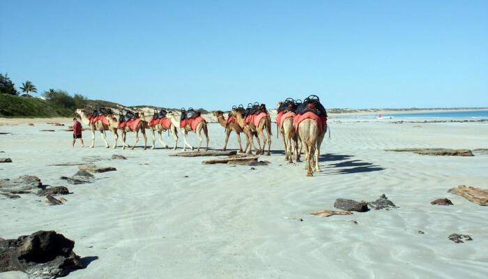 Sunset-Camel-Rides Cable beach Australia