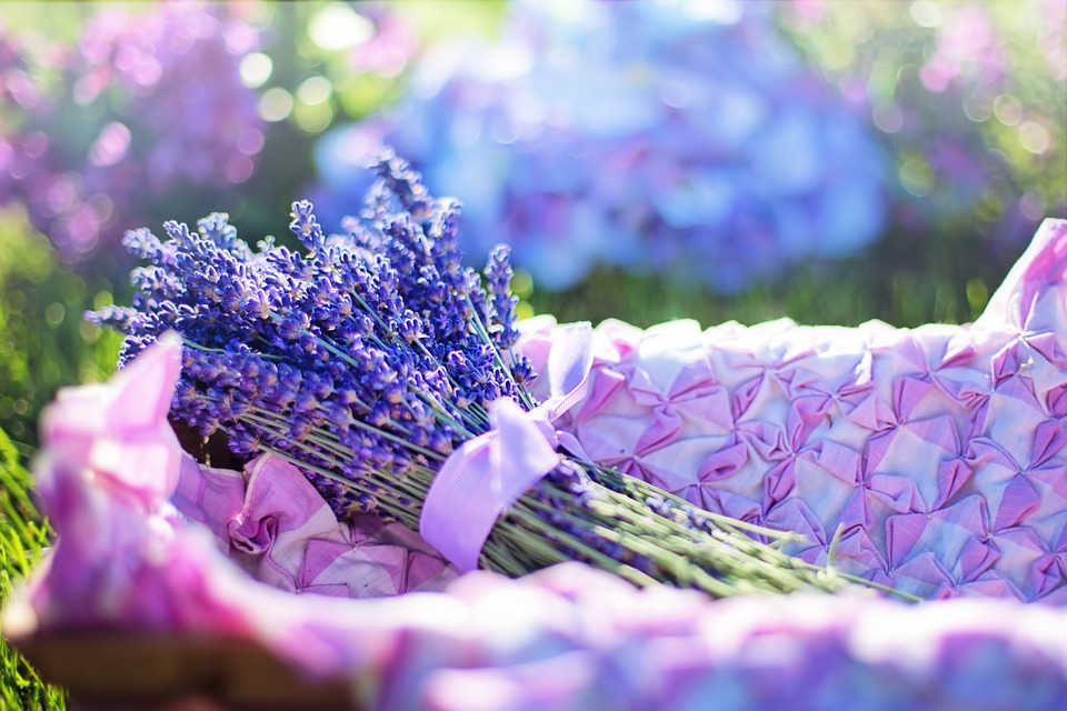 beautiful lavender for sleep apnea