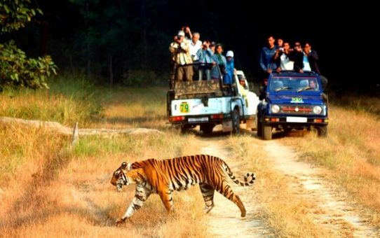 Jim Corbett National Park – The Perfect Weekend Destination For Adventure Seekers