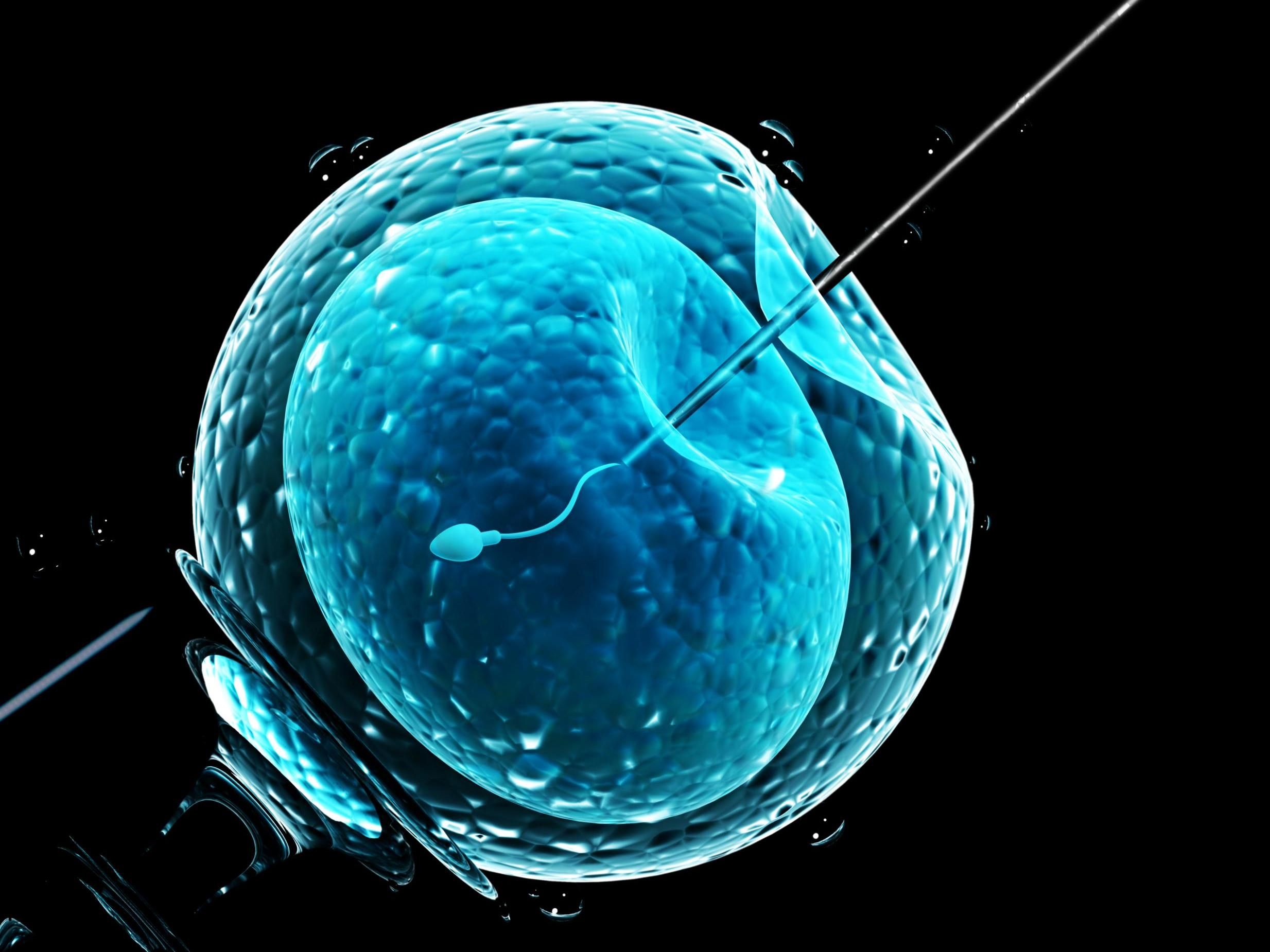 IVF treatment programs