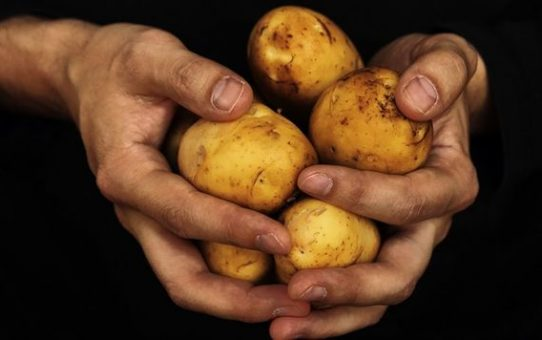 Benefits of Potato Diet Rules for Weight Loss
