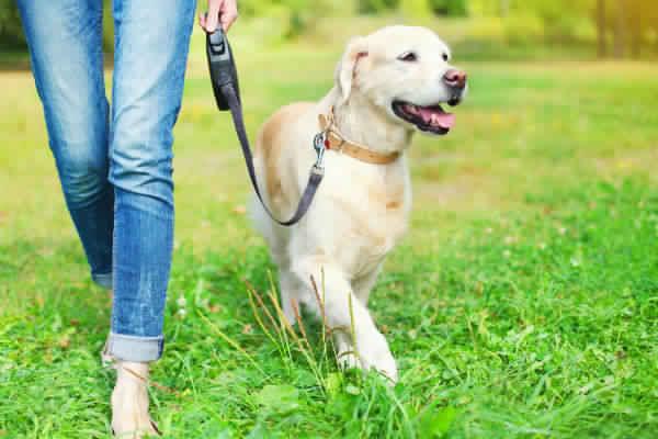 dog walking leash