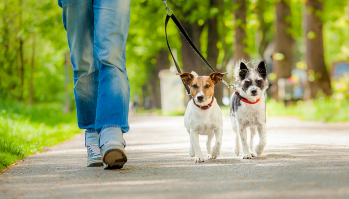 walk the 2 dogs - how to burn 300 calories