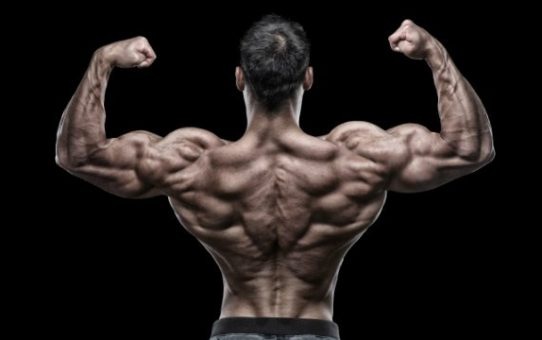 Best Exercises for Back and Chest