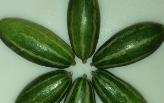 Pointed gourd: The Forgotten Vegetable of Indian Cuisine